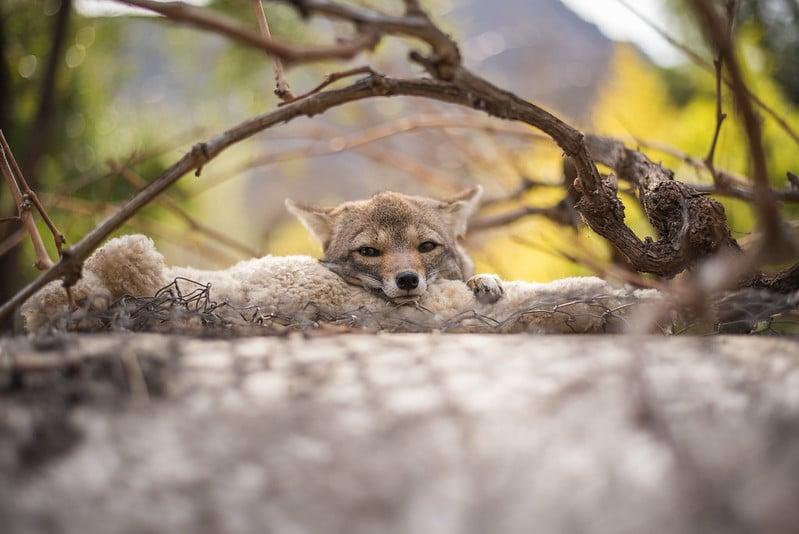 fox-refugiocascada